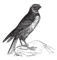 Hen Harrier vintage engraving vector image vector image