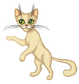 Cute kitten standing vector image