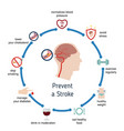 infographics for stroke infographics for stroke vector image