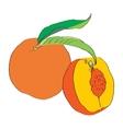 ripe peach vector image