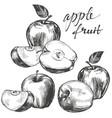 apple fruit set hand drawn vector image