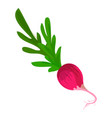 fresh radish icon cartoon style vector image
