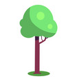 tree with brown trunk and green leaves vector image vector image