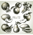 Hand drawn sketch fruit set Eco foods vector image vector image