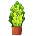 plant in pot with soil isolated vector image vector image