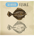sketch of fluke or summer flounder vector image vector image