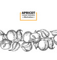 apricot branch seamless vintage border hand drawn vector image vector image
