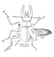 stag beetle vintage vector image vector image