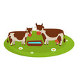cows with wooden trough full of water on field vector image