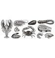 Crustaceans shrimp lobster or crayfish crab