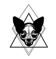skull of a cat cat silhouette vector image vector image