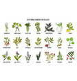 collection of best herbs for cellulite vector image vector image