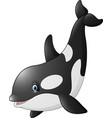 cute orca isolated on white background vector image vector image