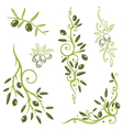 Olive vegetable vector image vector image