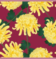 yellow chrysanthemum flower on violet background vector image vector image