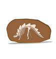 bone of stegosauras in clay fossil vector image vector image