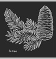 fir tree branch with cone and needle leaves hand vector image vector image