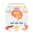 food intake control diagram vector image vector image
