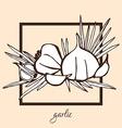 hand drawn garlic vector image