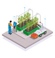 modern greenhouse isometric colored concept vector image