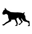 silhouette of a boxer breed dog vector image