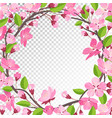 cherry blossom background vector image vector image