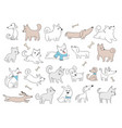 dogs characters funny domestic animals playing vector image