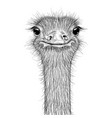 ostrich sketch head closeup vector image vector image