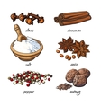 Set of spices - cinnamon pepper anise nutmeg vector image