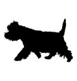 west highland white terrier vector image