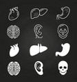 line and outline white human organs vector image