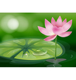 A pink flower at the pond vector image vector image