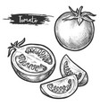 sliced tomato fetus sketch hand drawn vegetable vector image vector image