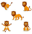 cartoon lion set with different pose vector image vector image