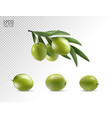 green olives set isolated on transparent vector image