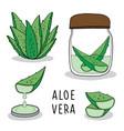 aloe vera soap hand drawn vector image vector image
