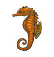 sea horse fish color sketch engraving vector image vector image
