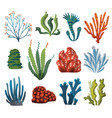 set watercolor seaweed and corals isolated on vector image vector image