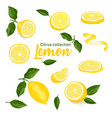 color set of hand drawn tropical citrus fruit vector image