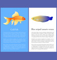 gold fish and blue striped tamarin wrasse icons vector image vector image