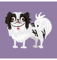 Japanese Chin of a dog vector image