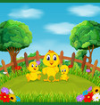 little yellow chicken playing vector image