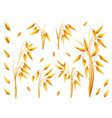 realistic bunch of oats or barley isolated on vector image vector image