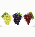 red and white table grapes wine grapes fresh vector image vector image