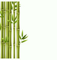bamboo background green rainforest stems vector image vector image