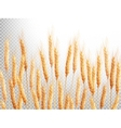 Field of golden wheat EPS 10 vector image