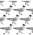 pattern with hand drawn seagulls vector image vector image