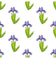 seamless pattern with dwarf lake iris vector image vector image