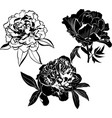set peonies flowers isolated on white backgroun vector image