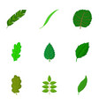 torn green leaf icons set cartoon style vector image vector image